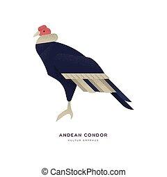 isolato, animale, condor, andino, uccello selvaggio