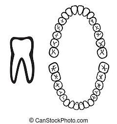 isolato, bianco, numeri, dente