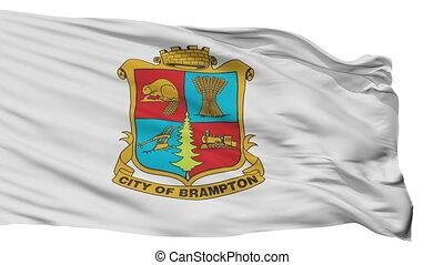 isolato, brampton, città, bandiera, canada