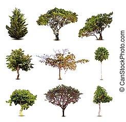 isolato, collezione, fondo., vettore, albero, bianco
