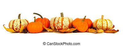 isolato, disposizione, autunno, zucche, bianco, bordo