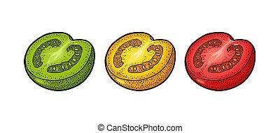 isolato, illustrazione, fondo., vettore, mezzo, bianco, tomato., inciso