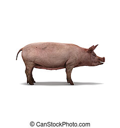 isolato, maiale, interpretazione, fondo, bianco, 3d