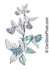 isolato, mano, fondo, disegnato, fiori bianchi