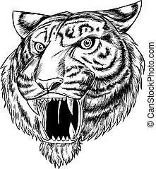 isolato, mano, tiger, fondo, disegnato, bianco