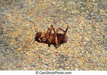 isolato, morto, scarafaggio, pavimento