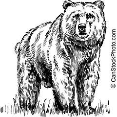 isolato, orso, vettore, nero, incidere, bianco