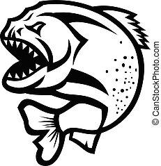 isolato, piranha, arrabbiato, nero, bianco, saltare, su
