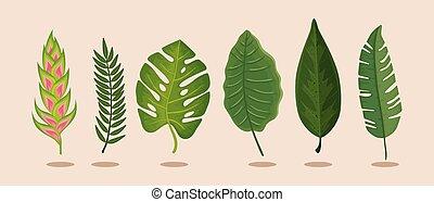 isolato, set, mette foglie, heliconia, fiore, icona
