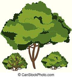isolato, verde bianco, fondo, shrubberies