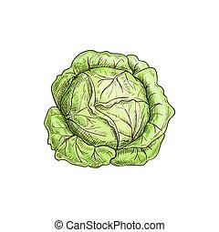 isolato, verdura verde, cibo, cavolo, testa, crudo