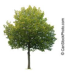 isolerat, lind, träd