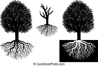 isolerat, träd, med, rötter