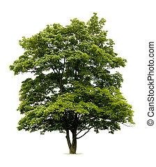 isolerat, träd