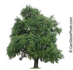 isoleret, træ