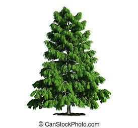 isoleret, træ, på hvide, cedertræ, (cedrus, deodara)