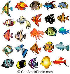 isoliert, weißer fisch, hintergrund, satz
