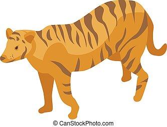 isométrique, style, zoo, tigre, icône