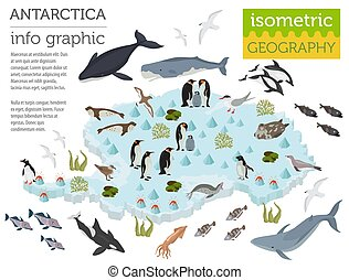 Isometric 3d Antarctica flora and fauna map elements....