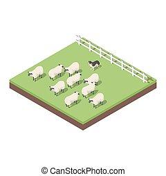 Isometric 3d vector illustration of farm animals