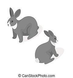 isometric, 3d, vetorial, ilustração, de, coelho cinzento