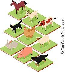 isometric, animais, doméstico