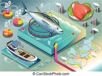 Isometric Infographic of Tuna Breeding