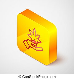 Isometric line Medical marijuana or cannabis leaf icon isolated on grey background. Hemp symbol. Yellow square button. Vector Illustration