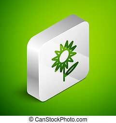 Isometric line Sunflower icon isolated on green background. Silver square button. Vector