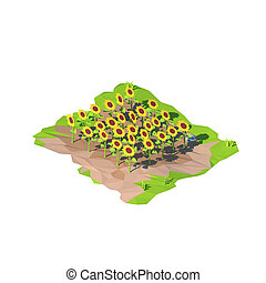 Isometric low poly sunflowers, 3D rendering