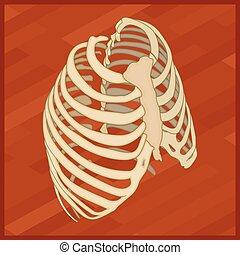 isometric, pictogram, thorax, menselijk, plat