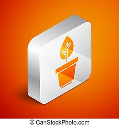 Isometric Plant in pot icon isolated on orange background. Plant growing in a pot. Potted plant sign. Silver square button. Vector