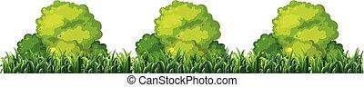 Isplated plant bush on white background