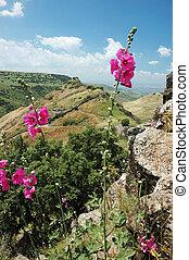 israelí, parque nacional, hights, gamla, golan