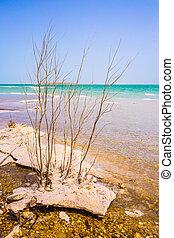 Israel, spring, Dead Sea