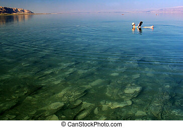 israel, viagem, -, morto, fotografias, mar