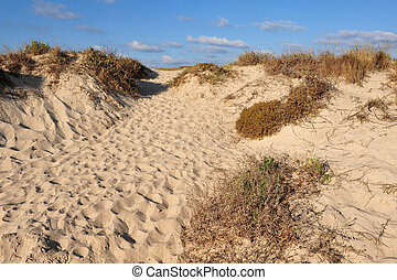 israel-, viaggiare, foto, habonim, dor, spiaggia