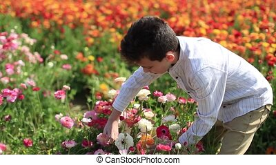israeli child picking the blossoming flowers of a garden buttercups in the magnificent garden