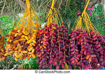 Israeli Market - Multi-colored Dates in the Israeli Market