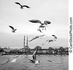 Istanbul, Kadikoy dancing seagulls on the pier