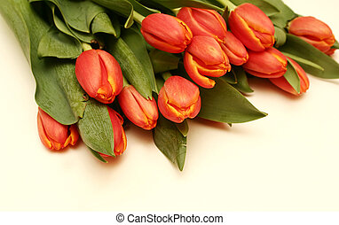 It is a lot of tulips on