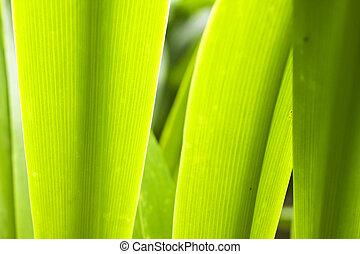 it is a shot of fresh green grass