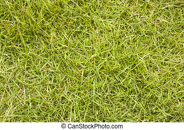 it is a shot of green grass background