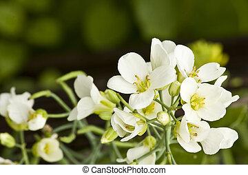 it is a white flower