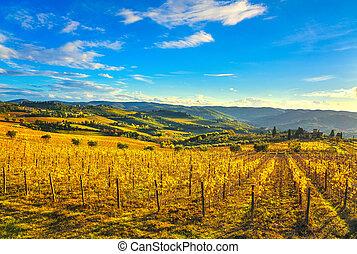 italia, chianti, toscana, vigneto, panorama, panzano, sunset.