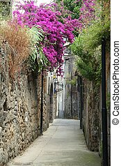 Italian Alley - An alleyway with flowers in Sorrento, Italy