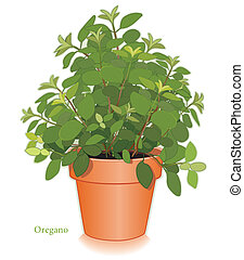 Italian Oregano herb plant in clay flowerpot. Aromatic leaves used to season meats, poultry, stews, soups, Mediterranean cooking. EPS8 compatible.