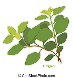 Oregano, aromatic perennial herb, flavorful leaves used as seasoning in Italian, Mediterranean, Latin cuisines, meats, poultry, soups, stews. Classic ingredient of French herb blend, Herbes de Provence. See other herbs and spices in this series.
