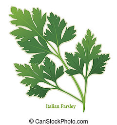 Italian Parsley, also called Flat Leaf Parsley. Long, slender stalks, dark green leaves. Preferred variety for cooking and garnishes. Classic ingredient of French herb blends, Bouquet garni and Fines Herbes. See other herbs and spices in this series.