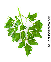 Italian Parsley over white background